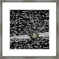 Painted Turtle In A Monochrome World Framed Print