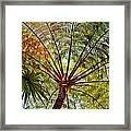 Palm Canopy Framed Print
