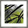 La Palm 3  Framed Print