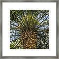 Palm Sky Framed Print