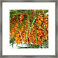 Palm Tree Fruit 1 Framed Print