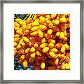 Palm Tree Fruit 2 Framed Print