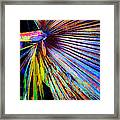 Palmetto Gone Wild Framed Print by Stephen Anderson