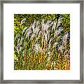 Pampas Grass Framed Print