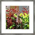Pam's Garden 10827 Framed Print