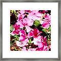 Pansies Garden Framed Print