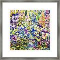 Pansy Path Framed Print by Ann  Nicholson