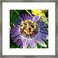 Passion Fruit Flower Framed Print