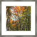 Path Through The Woods Framed Print