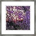 Peachy Sunset 1 Framed Print
