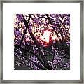 Peachy Sunset 2 Framed Print