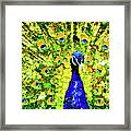 Peacock Abstract Realism Framed Print