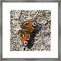 Peacock Butterfly Framed Print by Frits Selier