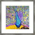Peacock Dance Framed Print