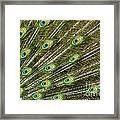 Peacock Feather Abstract Pattern Framed Print