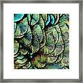 Peacock Pattern Framed Print