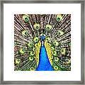 Peacock Framed Print