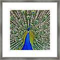 Peafowl Peacock Framed Print