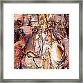Pealing Bark Upclose Framed Print