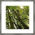 Peeking In Costa Rica Rain Forest Framed Print