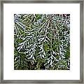 Perennial With Frost Framed Print