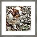Pet Me Framed Print