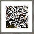 Petals In The Pond Framed Print