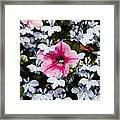Petunia And Friends Framed Print