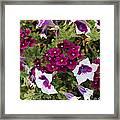 Petunias And Verbena I Framed Print