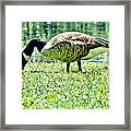 Philly Goose In The Grass Framed Print