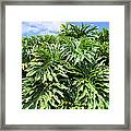 Philodendron 1 Framed Print
