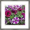 Pick Purple Framed Print