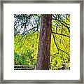Picnic By The Cypress Framed Print