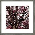 Picnic Rose  Framed Print