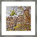 Pigeon Tree At The Taj Framed Print