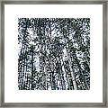 Pine Abstract Framed Print