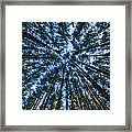 Pine Explosion Framed Print