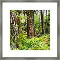 Pine Trees And Ferns Framed Print