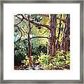 Pine Trees In Sunlight Framed Print