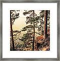 Pine Trees Of Holy Island Framed Print