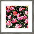 Pink And Red Ruffly Tulips Square Framed Print