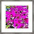Pink Bouganvilla Framed Print