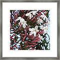 Pink Buds And Jasmine Blossom Close Up Framed Print