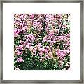 Pink Bush Framed Print