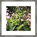 Pink Cosmos Swirl Framed Print