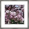 Pink Crabapple Framed Print