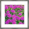Pink Garden Flowers Framed Print