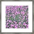 Pink Incarnated Framed Print by Sonali Gangane