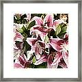 Pink Lilies I Framed Print