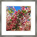 Pink Magnolia Framed Print by Joann Vitali